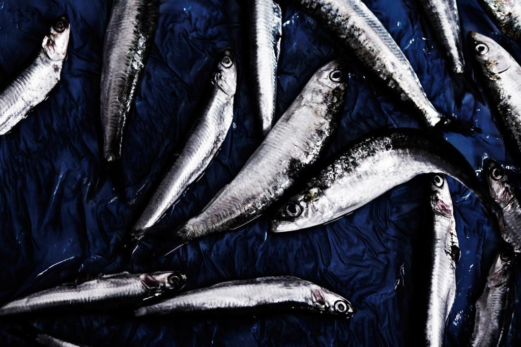 macro-pescados